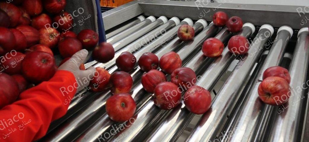واردات دستگاه سورتینگ سیب درختی