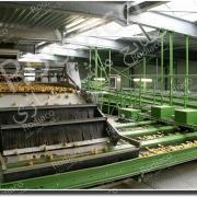 دستگاه سورتینگ سیب زمینی