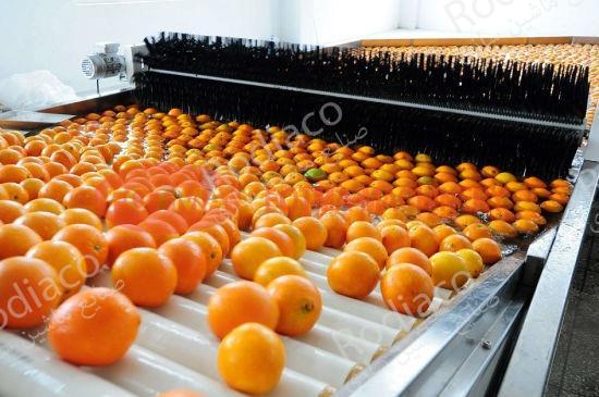 دستگاه سورتینگ پرتقال