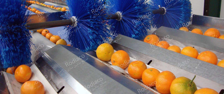 بخش شستشوی دوم میوه به همراه ضد عفونی