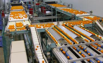 دستگاه سورتینگ پرتقال بازار